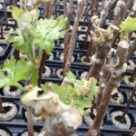 Propagating Grapes