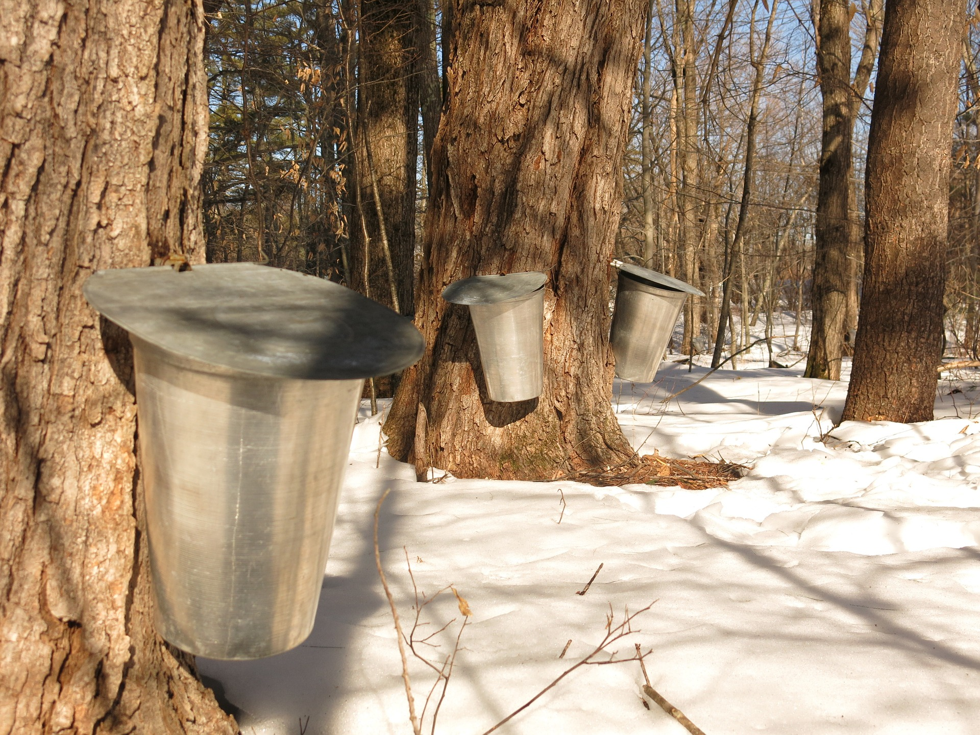 Can Small Scale Maple Sugaring Be Profitable?