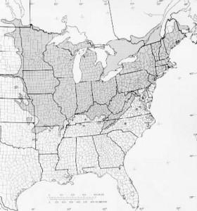 Tilia Americana Range - Linden