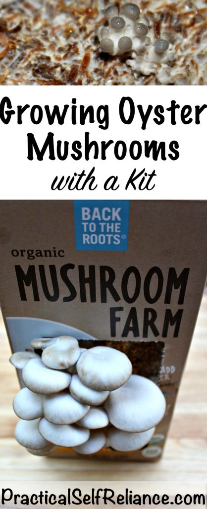 Growing Oyster Mushrooms with a Kit
