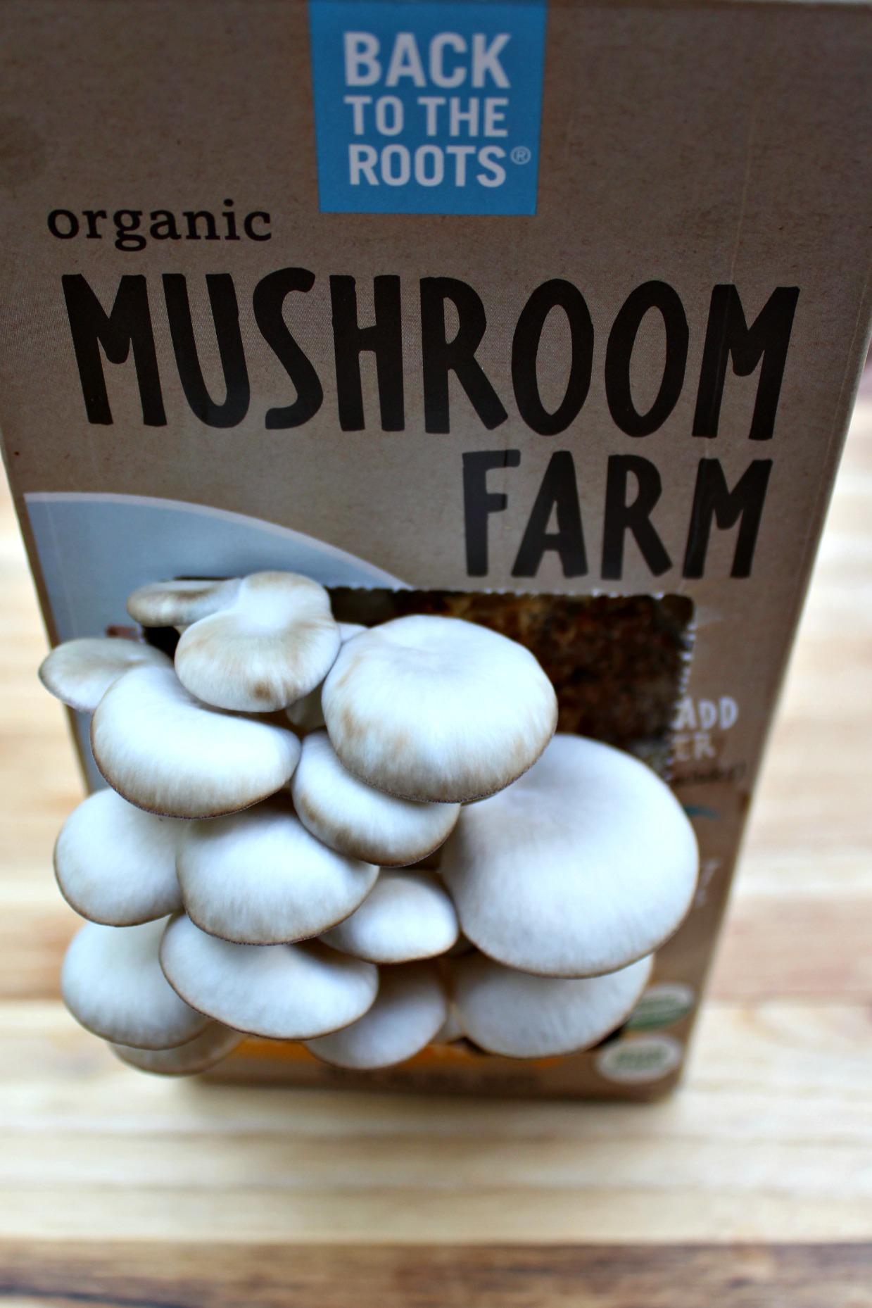 Oyster Mushroom Kit