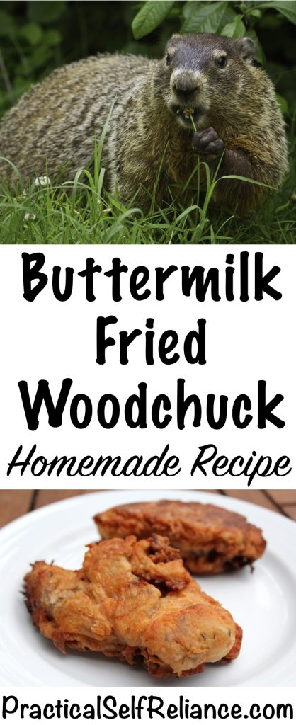 Buttermilk Fried Woodchuck (Groundhog) - Homemade Recipe