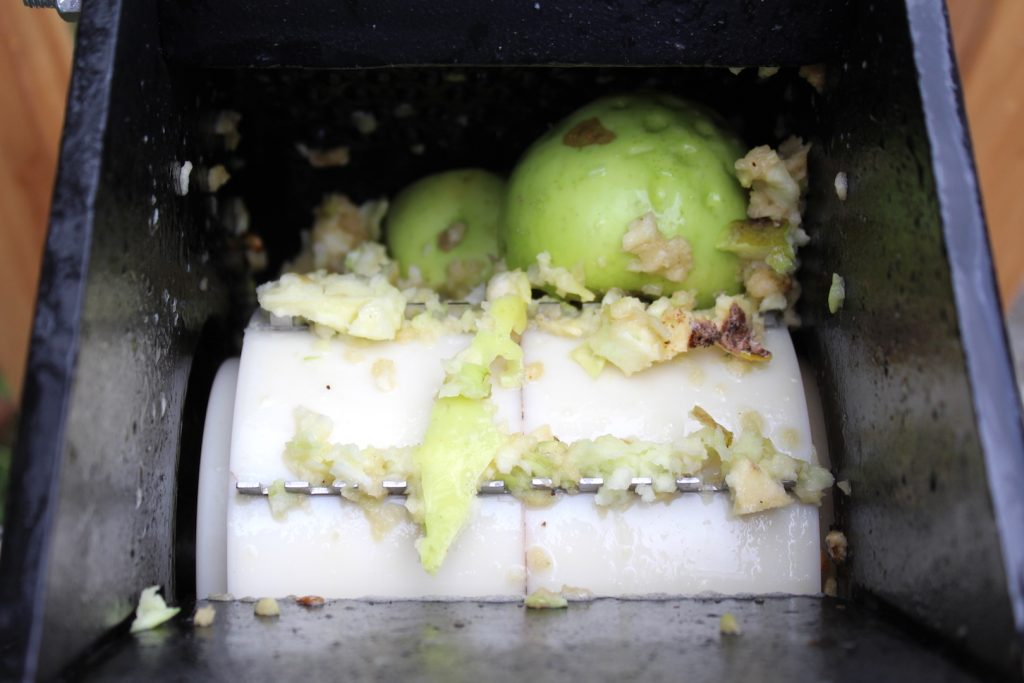 Grinding Apples Before Pressing for Cider