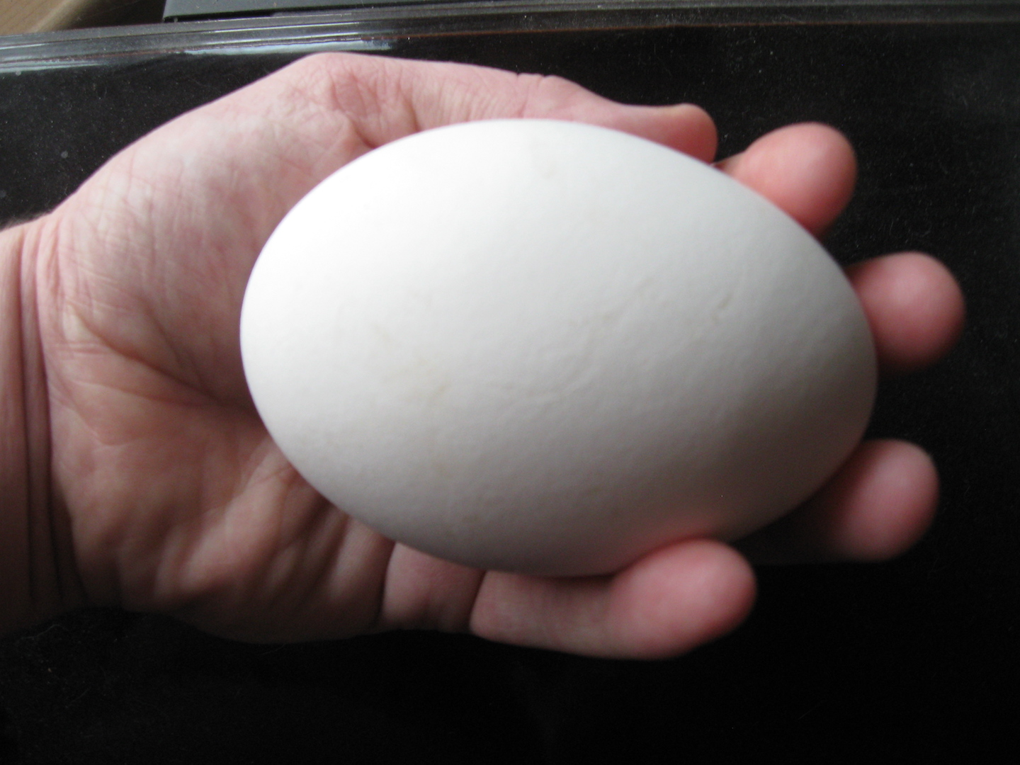 How is a Goose Egg Different From Chicken Egg?