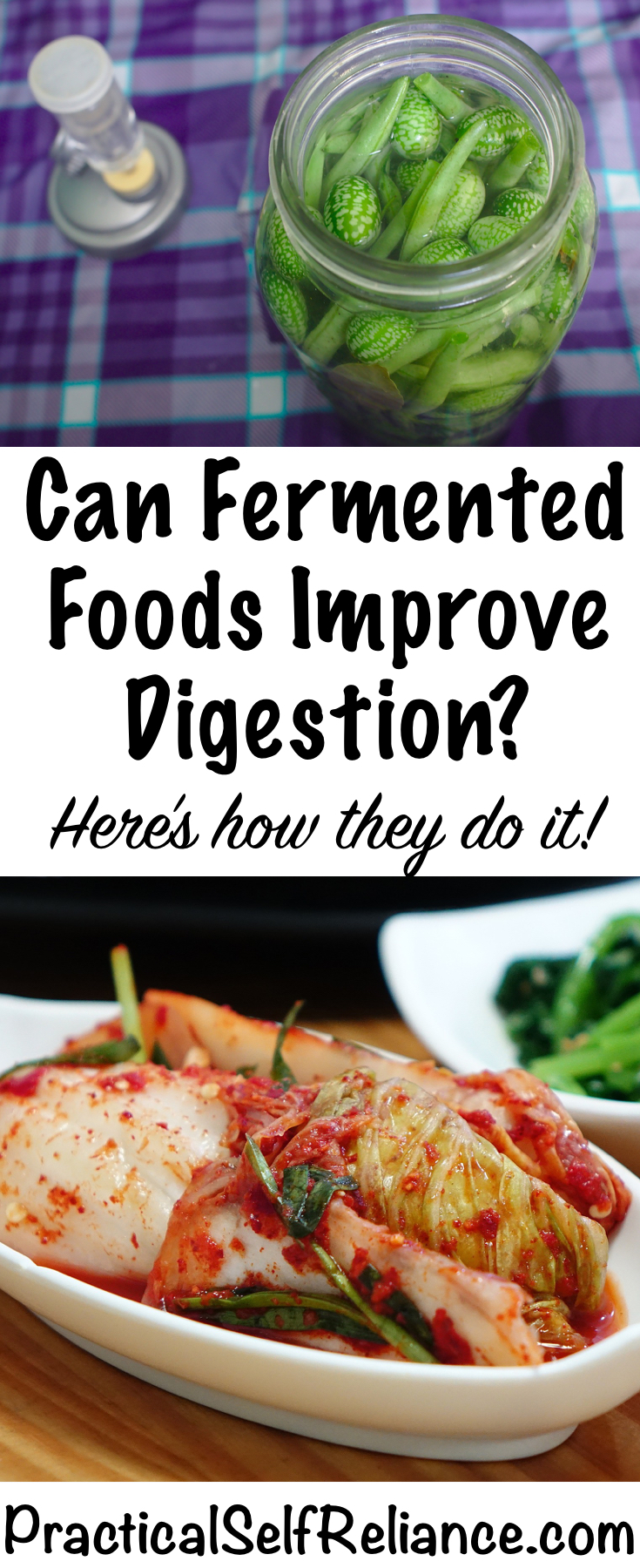 Can Fermented Foods Improve Digestion? Here's how!