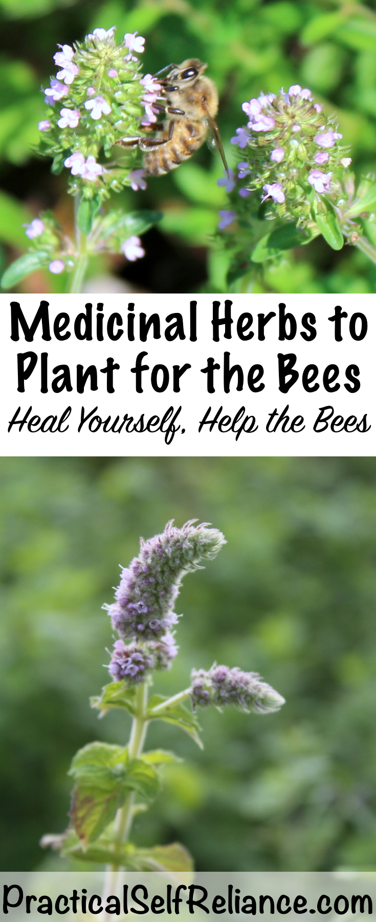 Medicinal Herbs to Plant for the Bees - Heal Yourself, Help the Bees