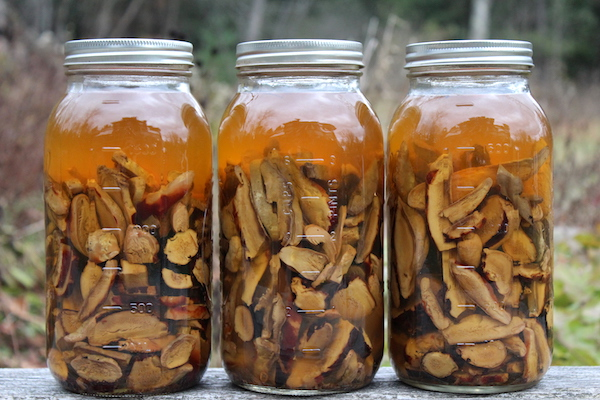 How to Make a Reishi Mushroom Tincture