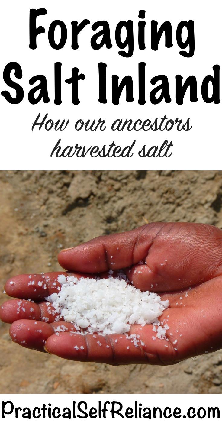 Foraging Salt Inland ~ How our ancestors harvested salt