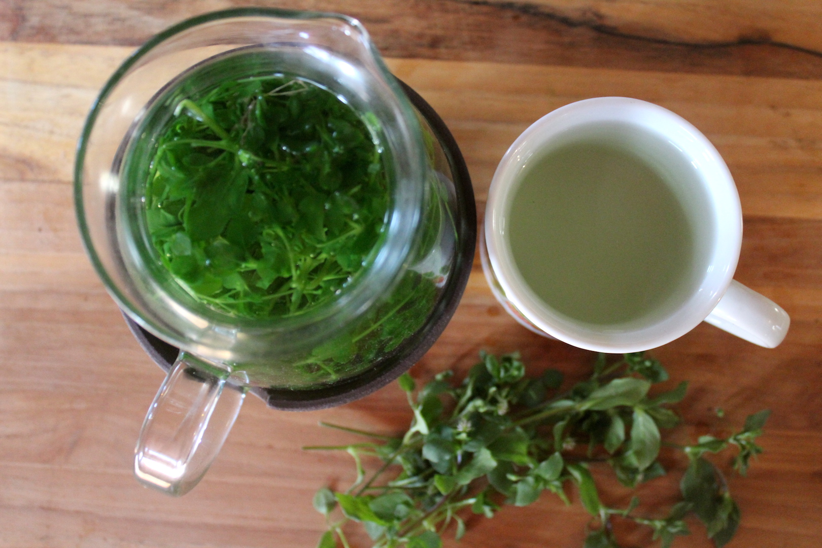 Chickweed Tea for Weight Loss