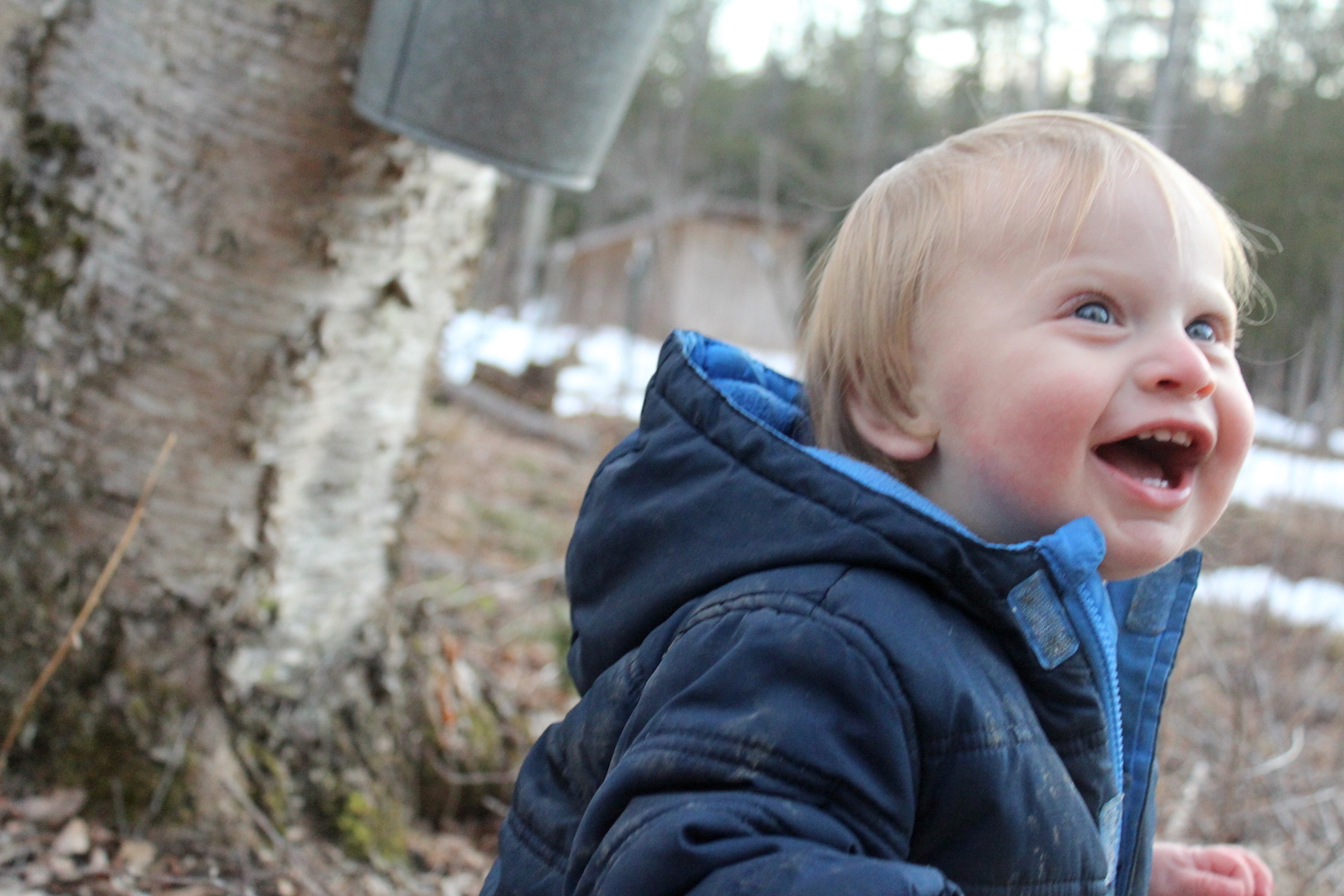 Child Tapping Birch Trees