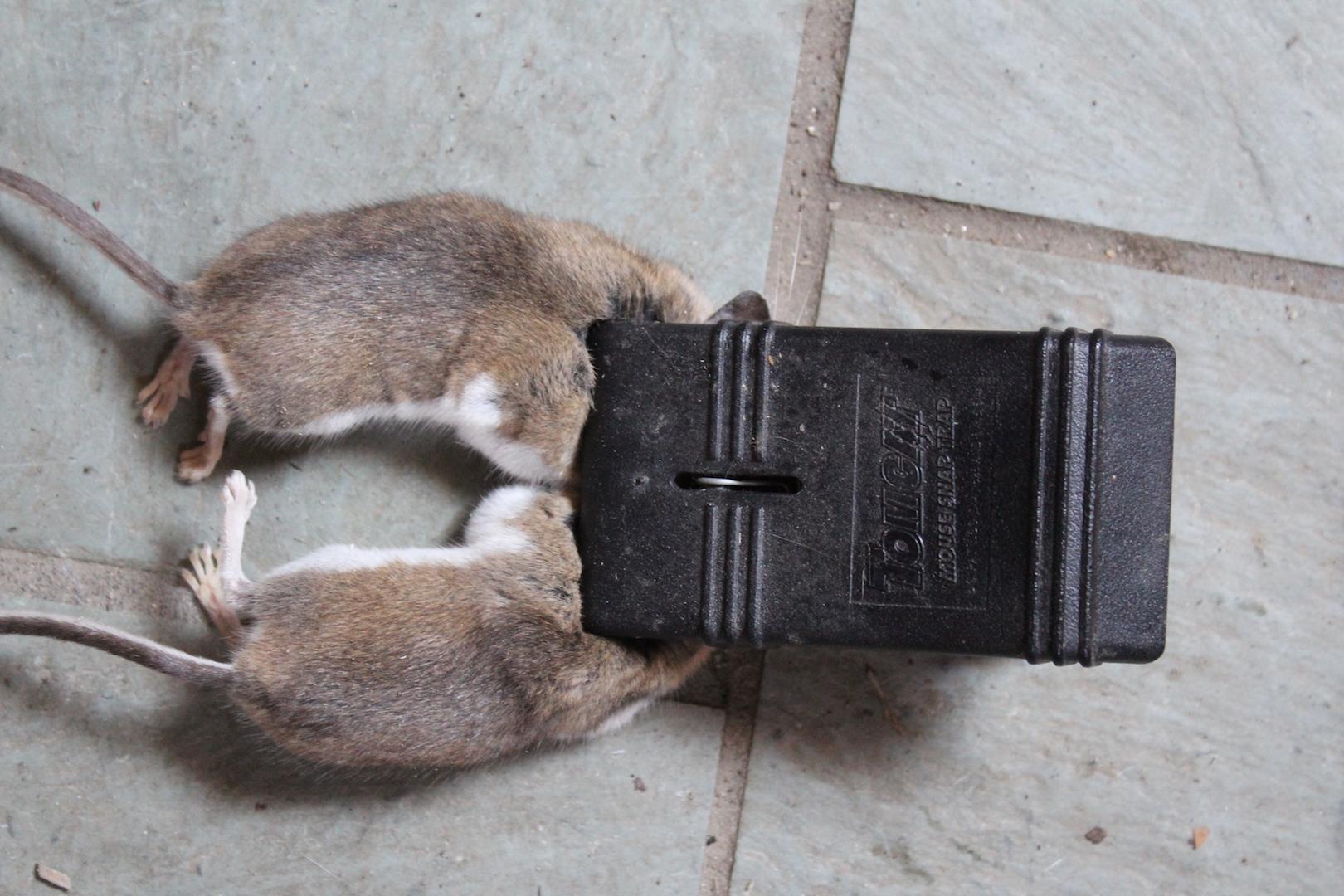 Effective Mouse Trap