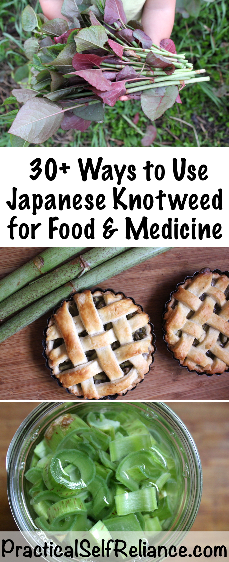 Using Japanese Knotweed for Food and Medicine