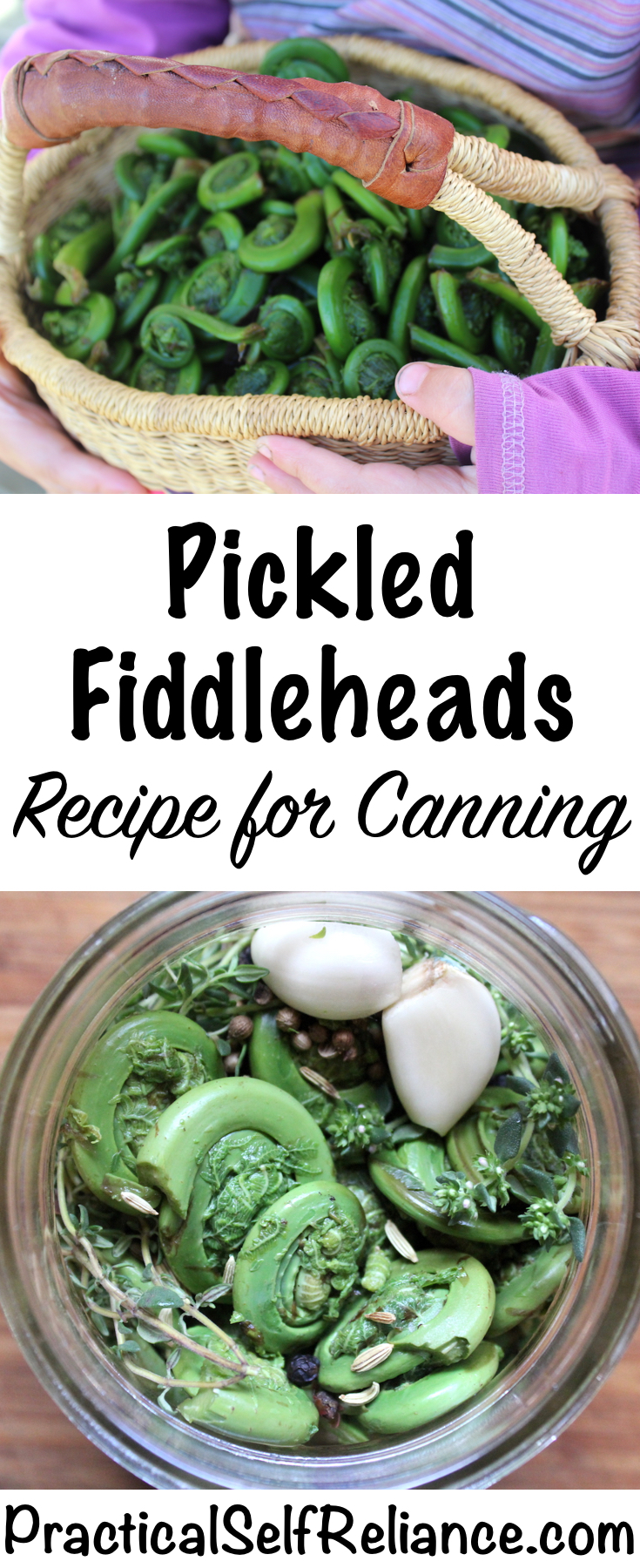 Pickled Fiddleheads ~ Recipe for Canning