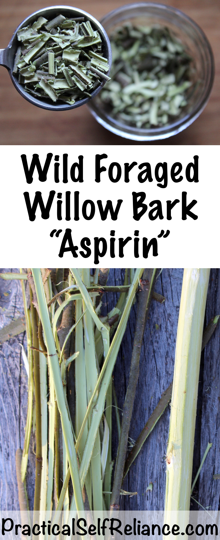 Foraging Willow Bark for Medicine ~ Natural Wild Aspirin