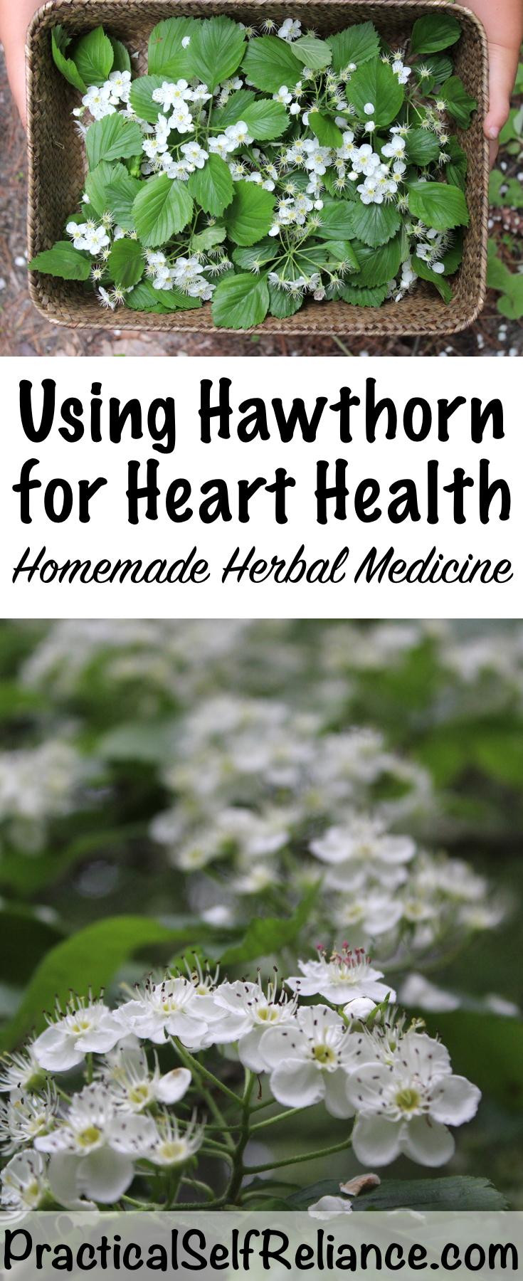 Hawthorn Herbal Medicine
