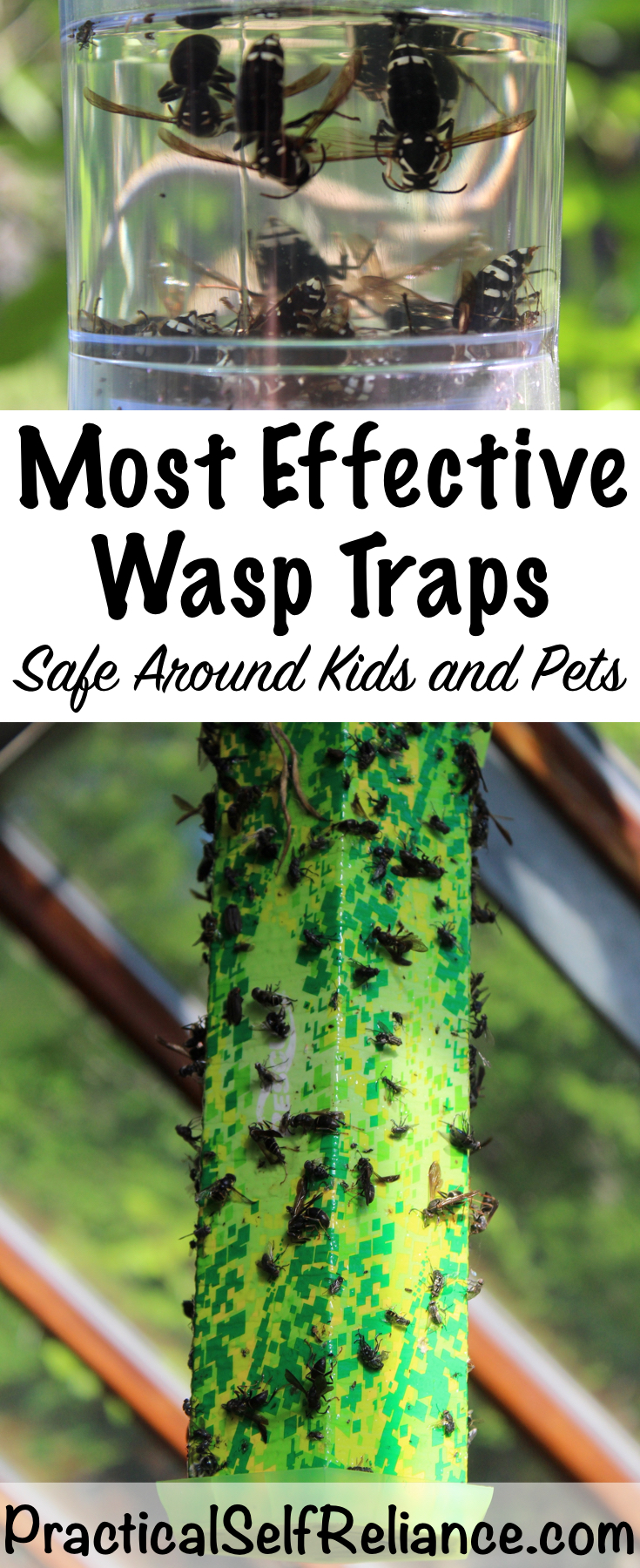 Natural Wasp Traps ~ Safe Around Kids and Pets