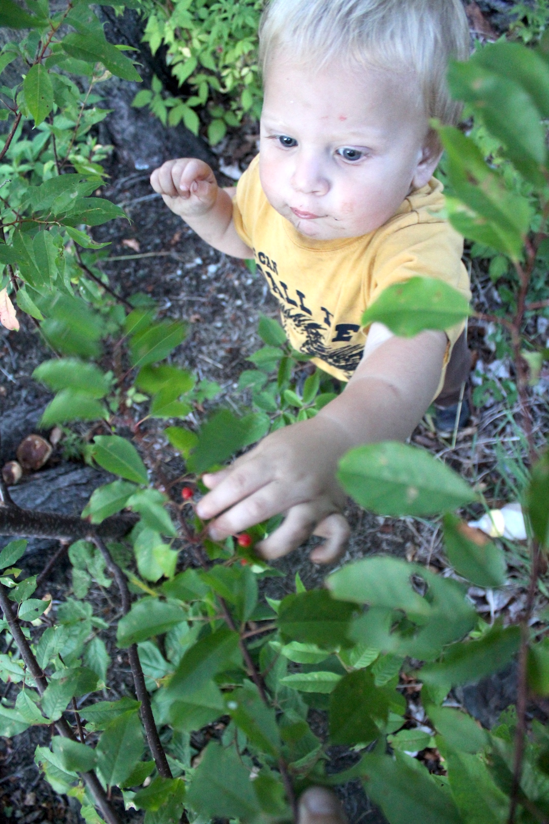 Child Foraging Pin Cherries