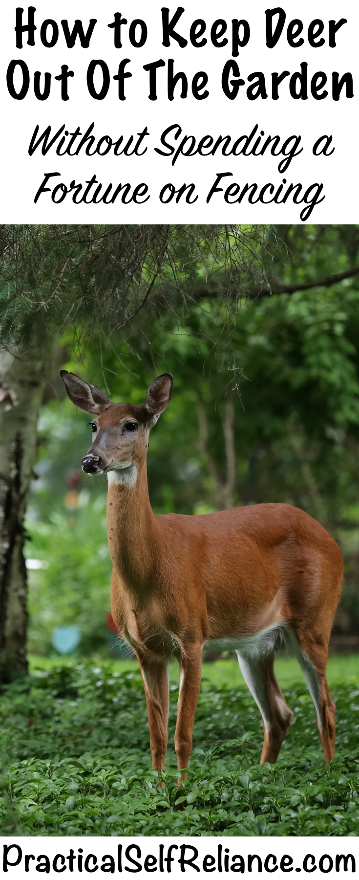 How to Keep Deer Out of the Garden