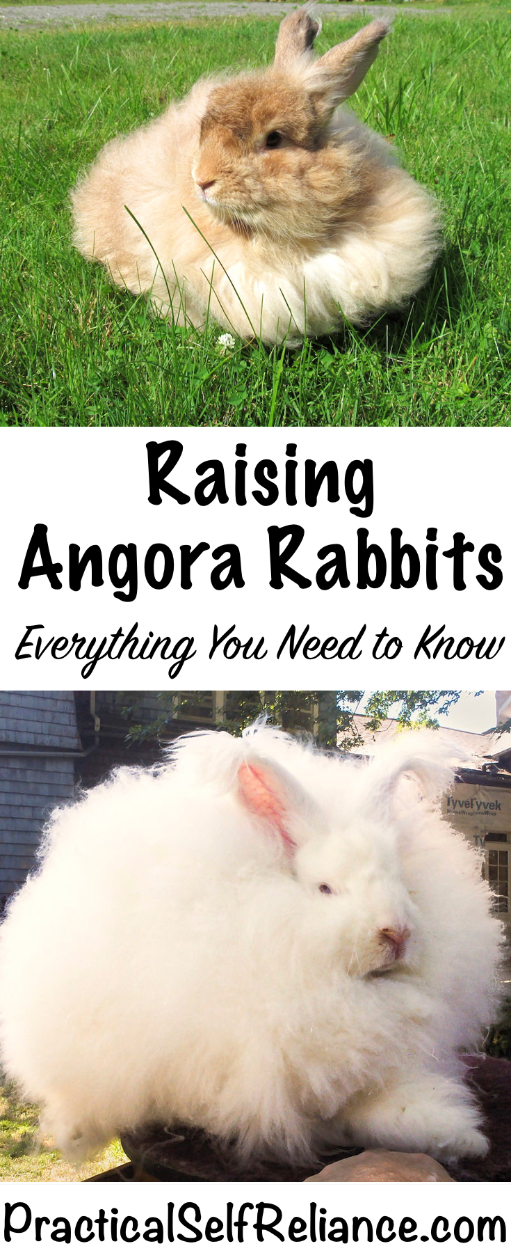 Raising Angora Rabbits for Fun and Fiber
