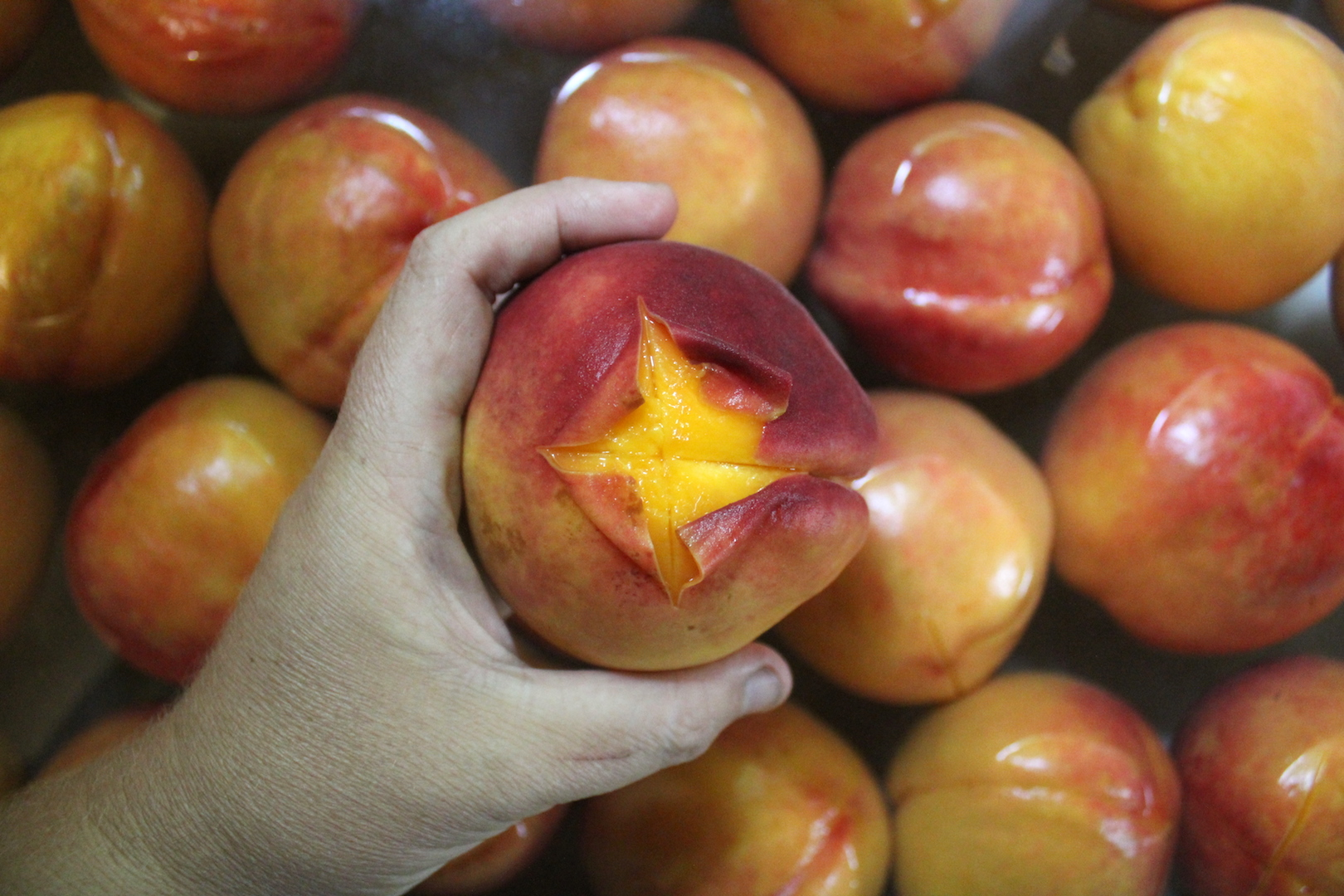 Peeling Peaches for home canning