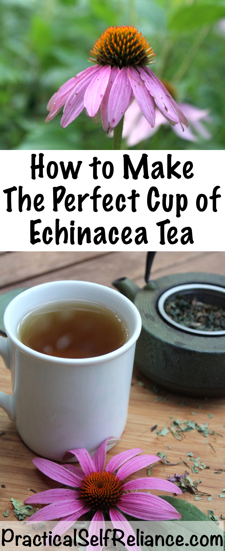 How to Make Echinacea Tea for Immune System Support