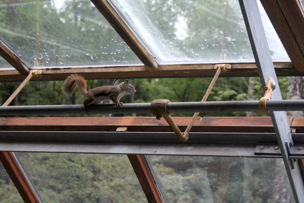 Greenhouse Squirrel Display
