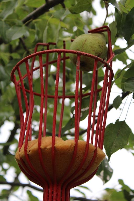 Pear Harvest Tool