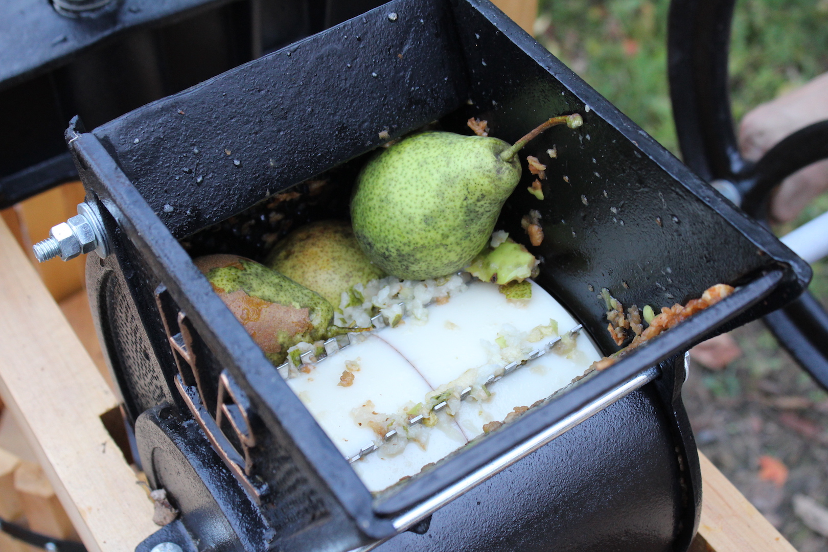 Pressing Pears for Pear Cider
