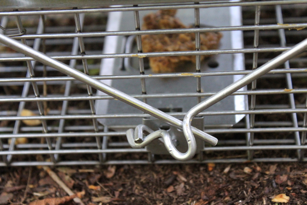 Best And Worst Squirrel Traps