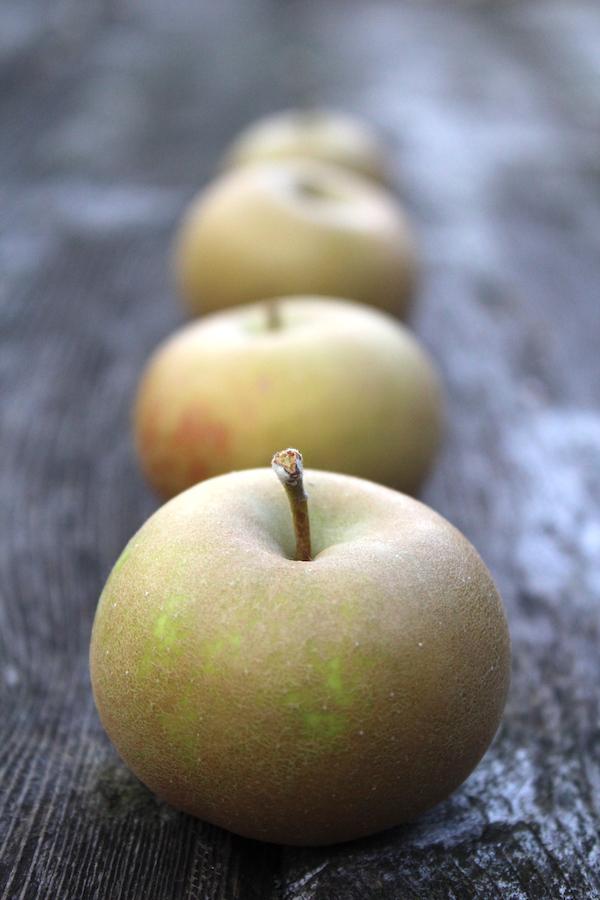 Pomme Gris Heirloom Apples