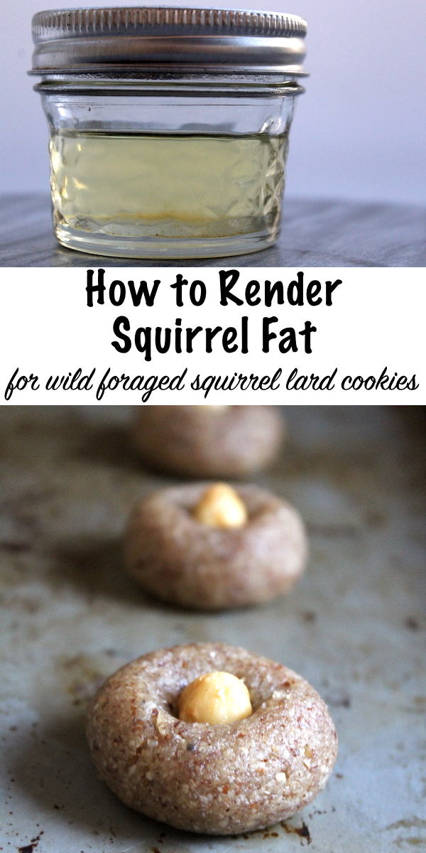 How to Render Squirrel Fat for Cookies ~ Wild Foraged Hazelnut flour Cookies with squirrel fat, quail eggs and maple syrup