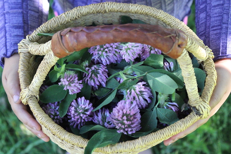 Getting Started Foraging With Kids