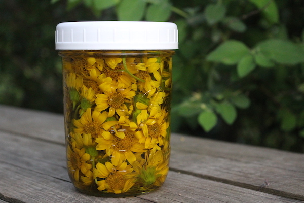 How to Make Arnica Oil & Salve (Plus How to Use Them)