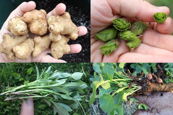 30+ Perennial Vegetables We Grow on our Permaculture Homestead