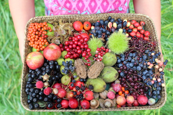 50+ Edible Wild Berries & Fruits ~ A Foragers Guide