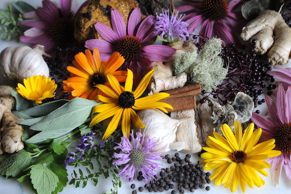 20+ Immune Boosting Herbs (& Mushrooms!)