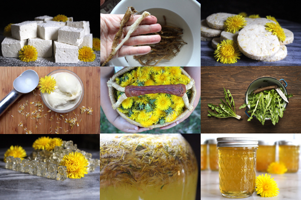 60+ Dandelion Recipes ~ Food, Drinks, Remedies & More