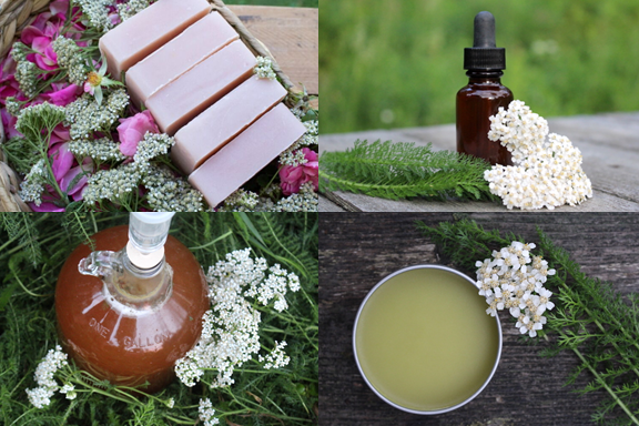 50+ Ways to Use Yarrow