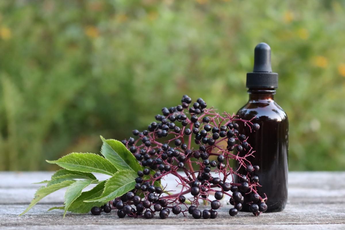 DIY Elderberry Tincture
