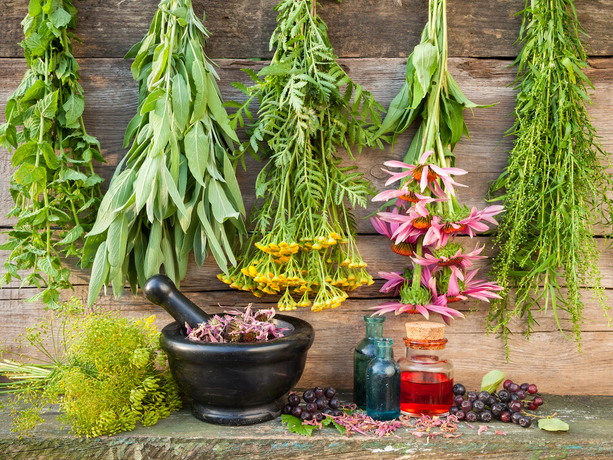 100+ Medicinal Plants and Their Uses