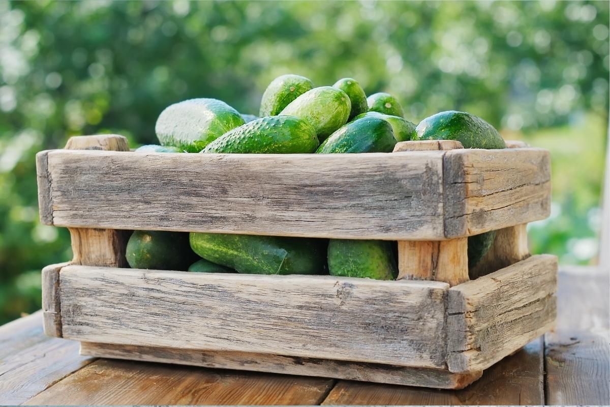 15+ Ways to Preserve Cucumbers