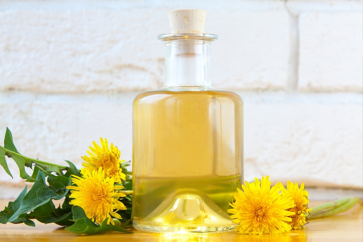 How to Make Dandelion Oil (& 7 Ways to Use It)